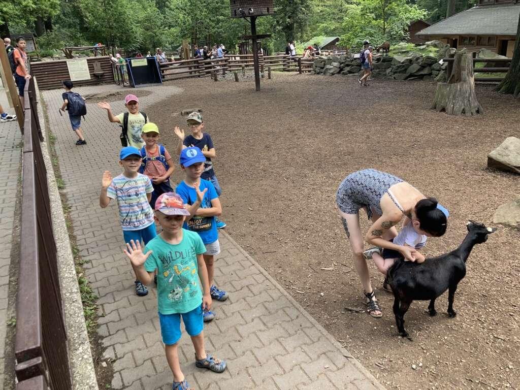 krmení v zoo
